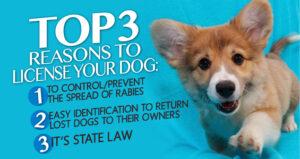 dog_licensing